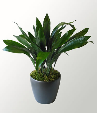 What Remains Now Blog Archive Easy Safe Plants