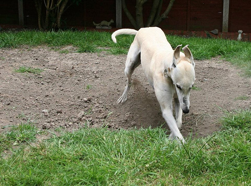 Digging Winnie