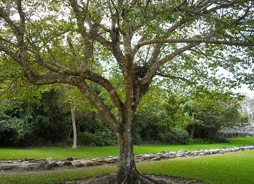 CLWL Part 8 Maya Path
