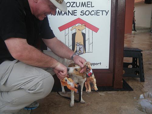 Cozumel Puppy