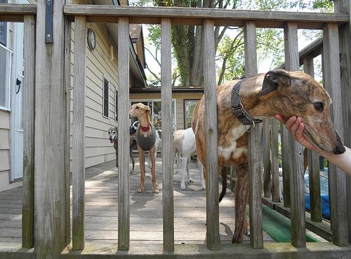 Host Pups