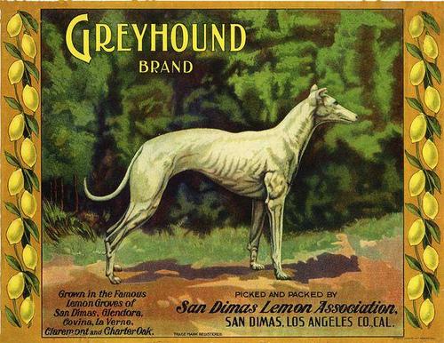 Greyhound Brand Crate Label