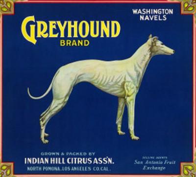 Indian Hill Citrus Association Greyhound Brand