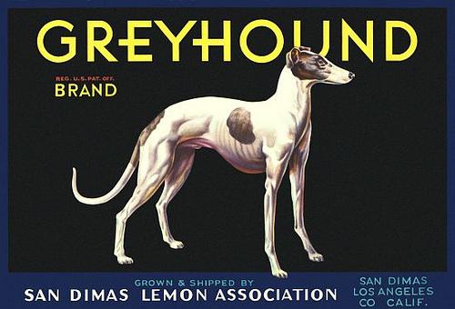 San Dimas Lemon Assoc Greyhound Brand