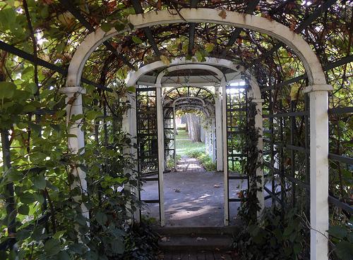 Summer Garden 9