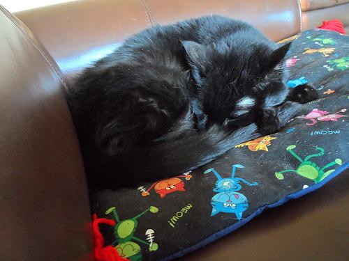 Twinke & Her Kittie Nip Nap Matz