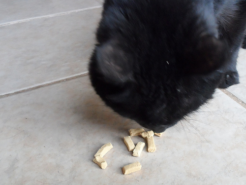 Twinkie Eating Orijen Cat Treats